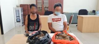 Polda Riau Amankan Penjual Sisik Tenggiling