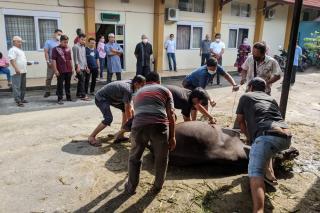 PN Pekanbaru sembelih satu ekor Hewan Kurban