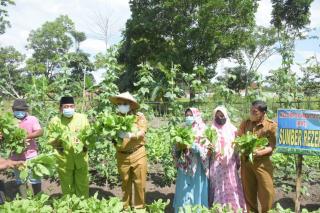 Bupati Kampar CSS Ikut Panen Sayuran di Lahan Wanita Tani Tapung