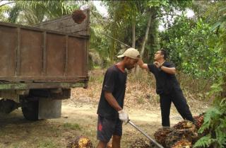 Harga Sawit di Riau Pekan Ini Tertinggi Sejak Indonesia Merdeka