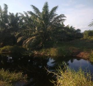 PT AA Dilaporkan ke Polda Riau, Dugaan Membuka Kebun di Kawasan Hutan