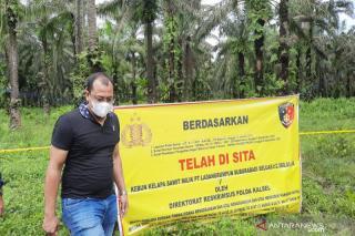 YLBHR: Ada oknum Pejabat KemenPUPR di Riau Berkebun Sawit 60 Ha di Konsesi!